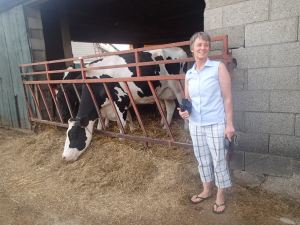 BIG cows.