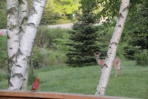Wildlife watches each other.