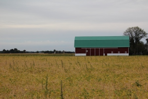 Red barn, green roof, yellow field.