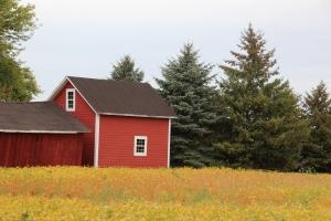 Red barn...yellow field.