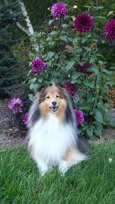Big purple flower.  Yawn.