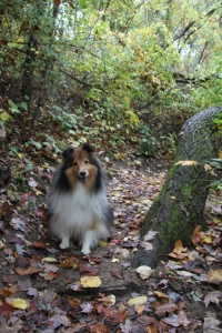 Pretty trail!