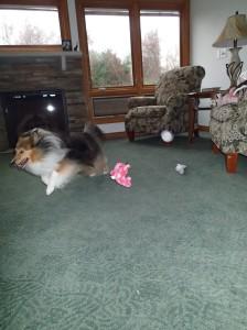 My house...my toys...all mine!