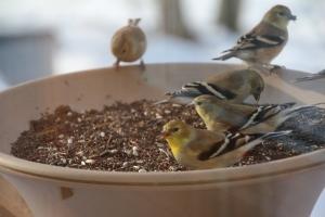 A bowl of birds