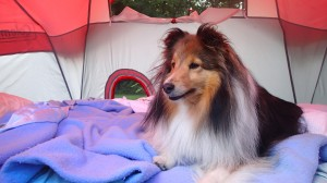 Summertime camping!