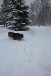 Hey Mama!  What happened to my path?