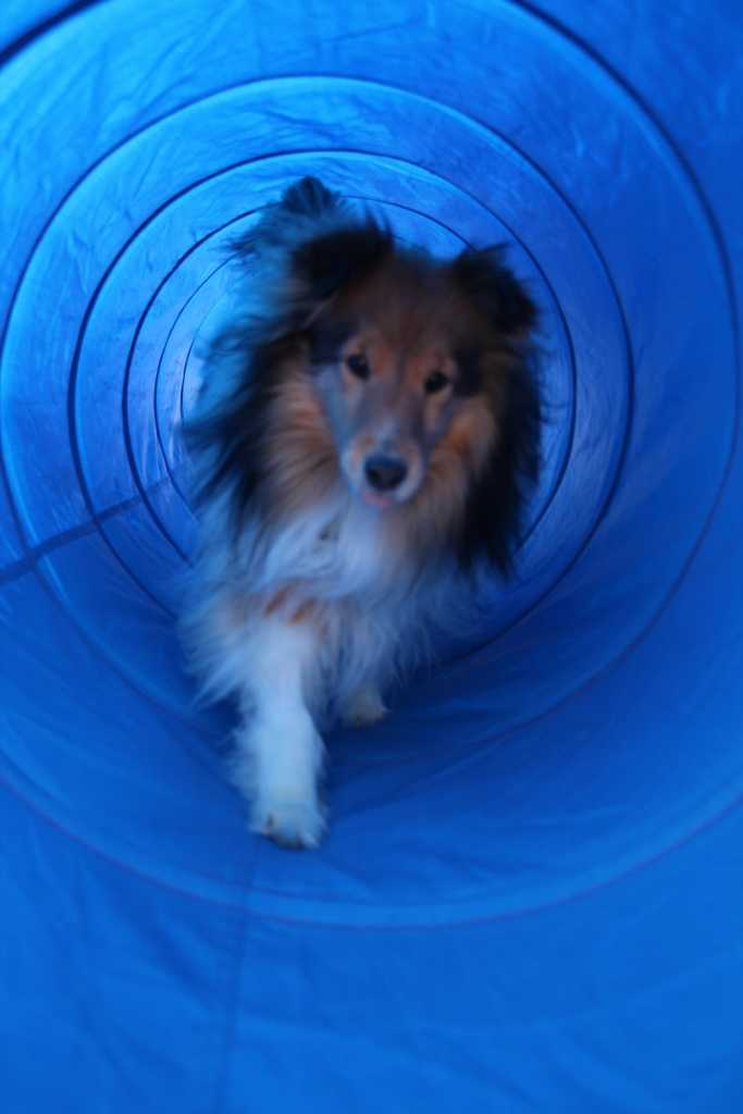 Love my tunnel!  Got a treat?