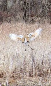 crain landing