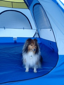 Welcome to MY tent!