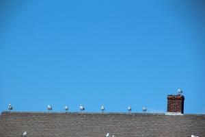 Linear birds.