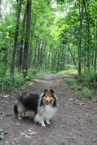 We went on lots of trails.