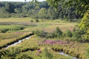 Wetlands being taken over.