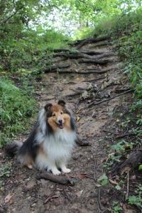 I'm a mountain climbing doggy!