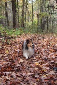 Strolling along enjoying the fall colors.