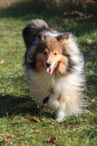 I love to run & I get treats too!  Win win!