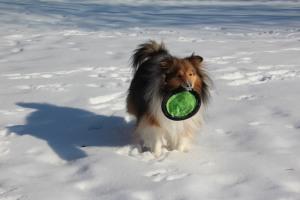 Throw it again mama!