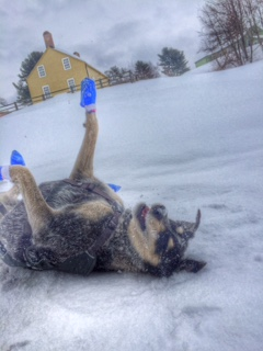 Norwood makes a snow angel.