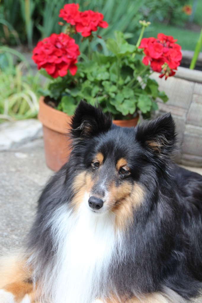 Handsome Ricky!