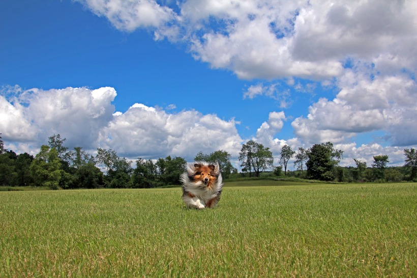 Pretty clouds...and a sheltie.