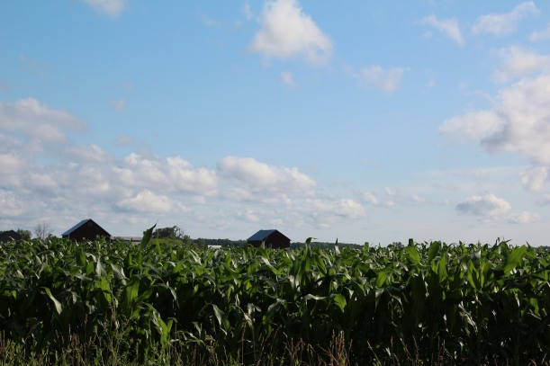 Corn is knee high by the 4th of July.