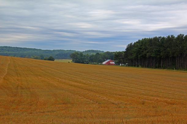 Fields of grain.