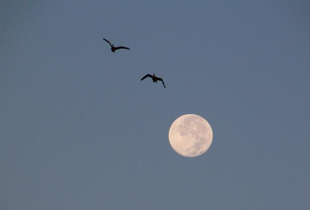 Noisy moon watchers