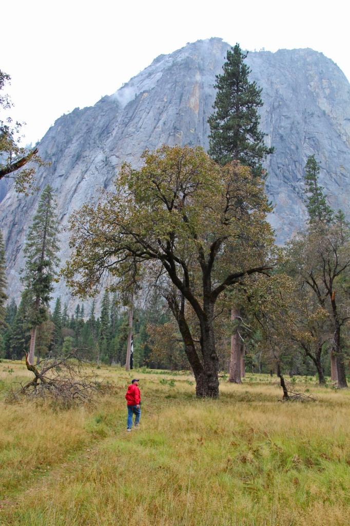 Yosemite grandeur