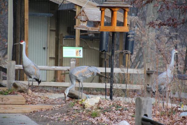 Cranes are EVERYWHERE!