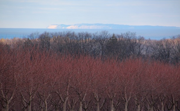 If you're on FB you've already seen this one; cherry trees, Lake Michigan & sand dunes