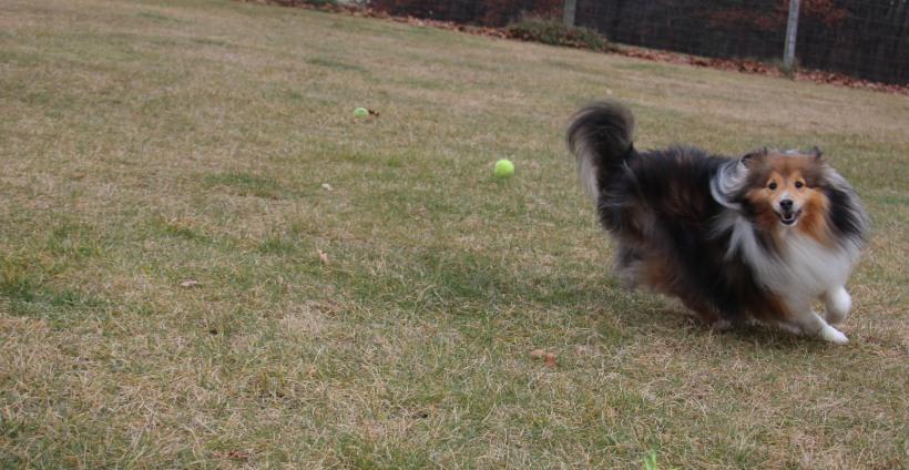 Get the ball mama!