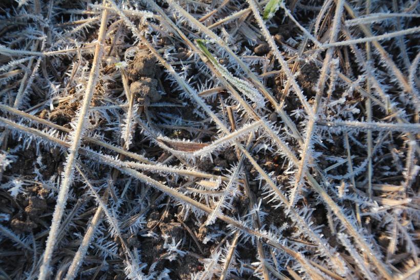 A frosty walk.