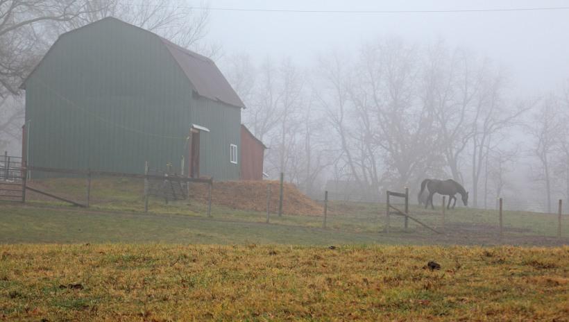 Foggy horse barn