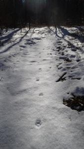 Cat walk?