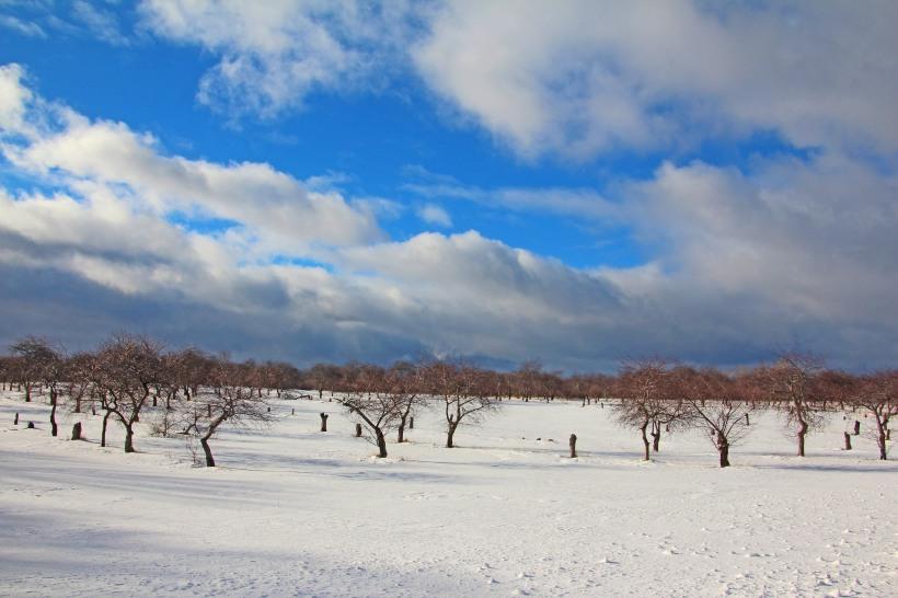 Orchards resting until spring.