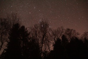 Orion's belt is caught in the tree branches.