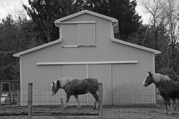 Horse house.