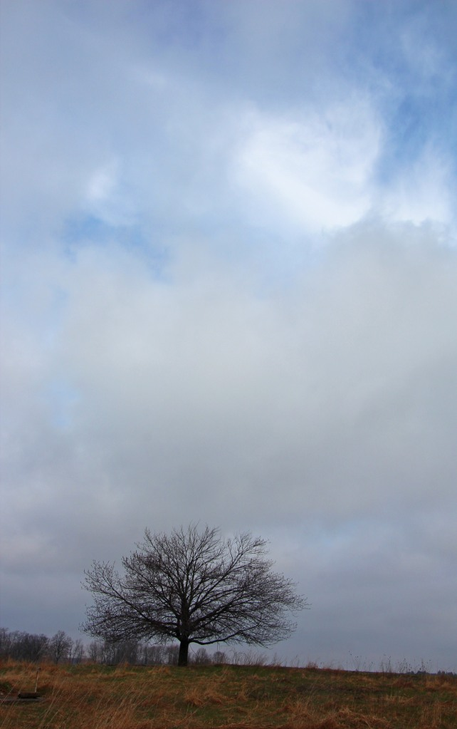 Little tree, big sky