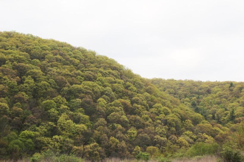 Green hills of Virginia.