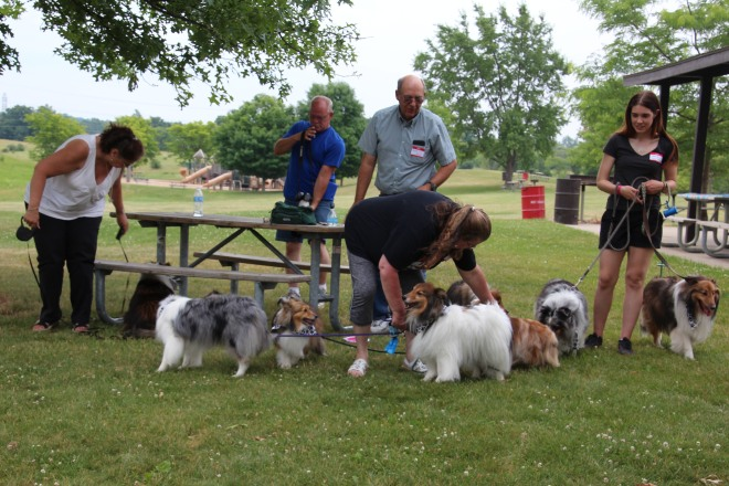 Lots of sheltie lovers.