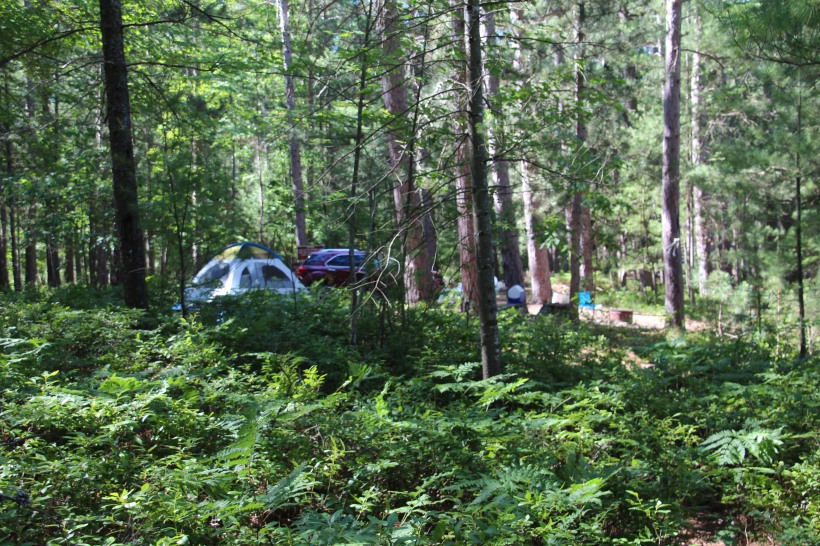 Our campsite among the ferns on the shore of a small lake.