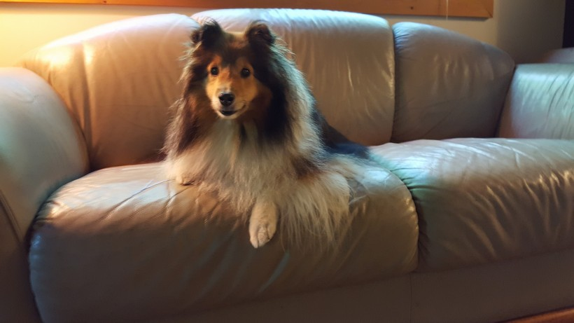 Hey mama!  A sofa!