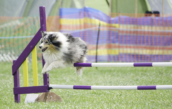Ludo could fly!