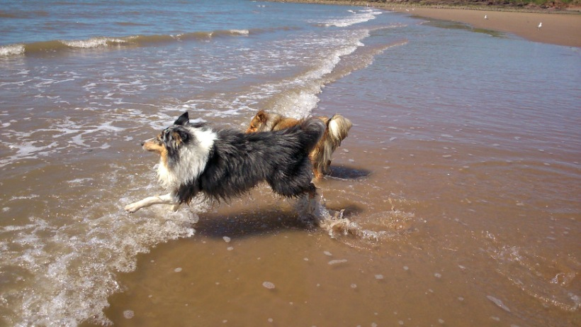 Gotta get those waves!