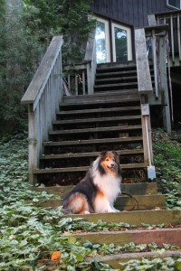 I'm not walking up all these steps mama!