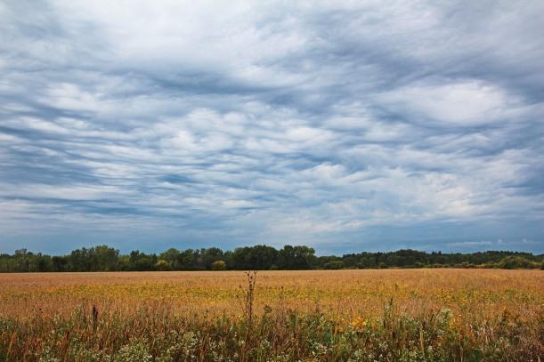 Farmland anticipates rain.