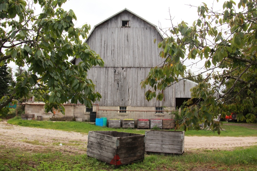 Apple barn.