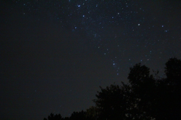 Stars over trees.