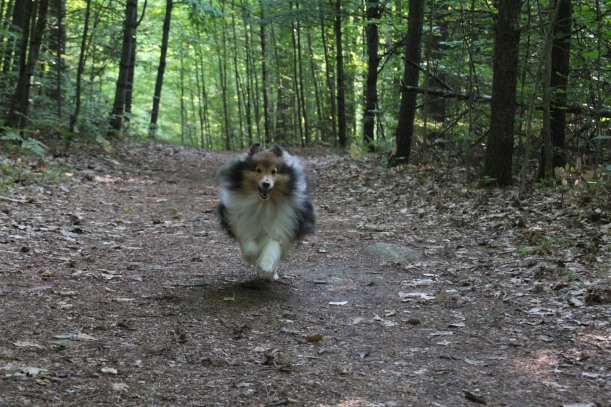 Early morning run!