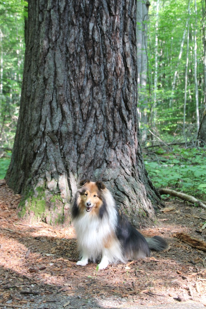 Everything is bigger than me in this woods!