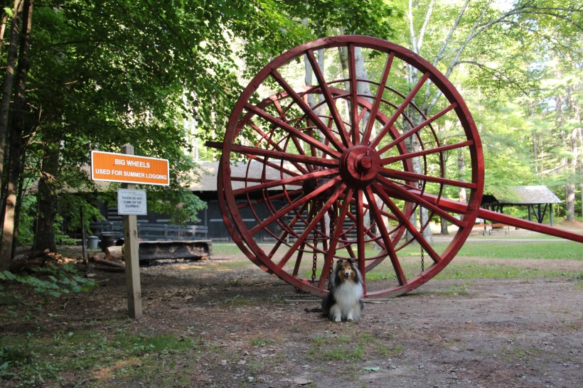 This wheel is LOTS bigger than me!